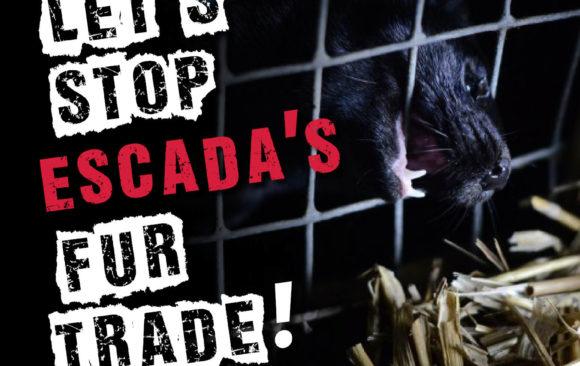 Schluss mit dem Profit auf Kosten der Tiere! – Aktionstage gegen den Pelzhandel bei Escada am 22. und 23. Februar 2019