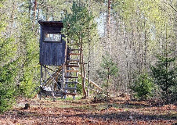 Pressemitteilung: Animal Liberation Front (ALF) zerstört mehr als 100 Hochsitze