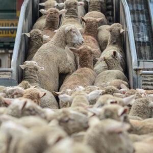 Rechte Parteien und der Tierschutz